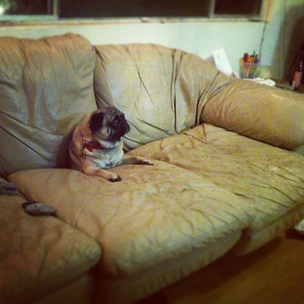 cats-and-dogs-losing-the-battle-with-human-furniture-11