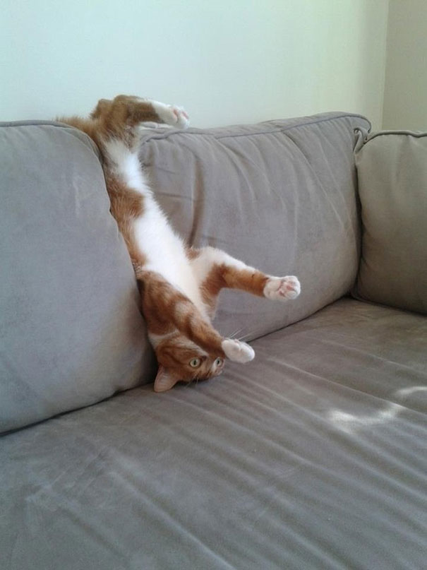 cats-and-dogs-losing-the-battle-with-human-furniture-15
