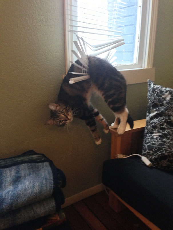 cats-and-dogs-losing-the-battle-with-human-furniture-16