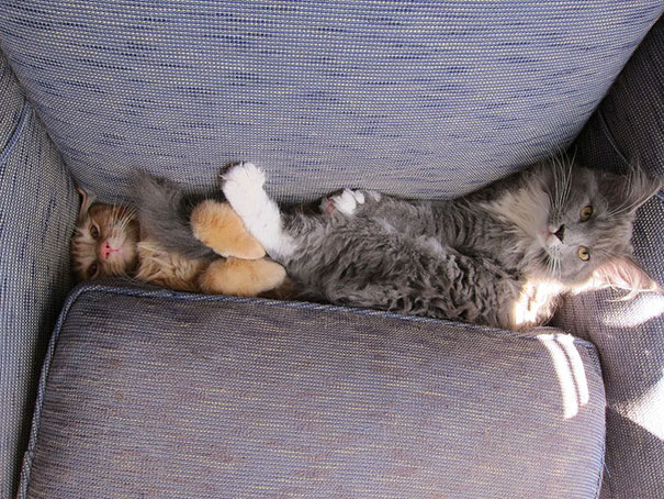 cats-and-dogs-losing-the-battle-with-human-furniture-27