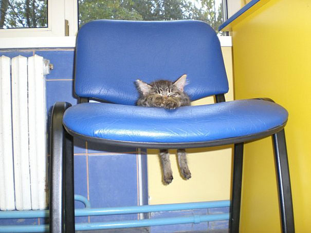 cats-and-dogs-losing-the-battle-with-human-furniture-3