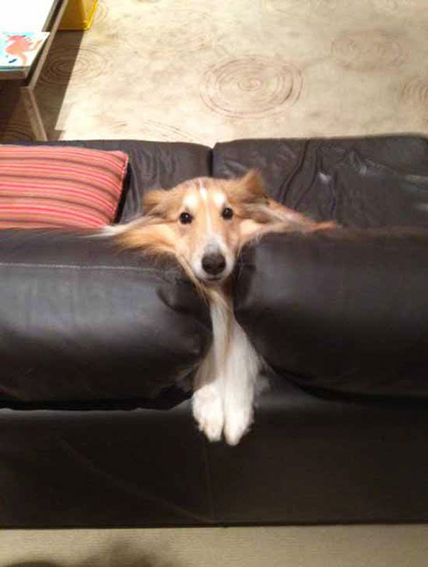 cats-and-dogs-losing-the-battle-with-human-furniture-4