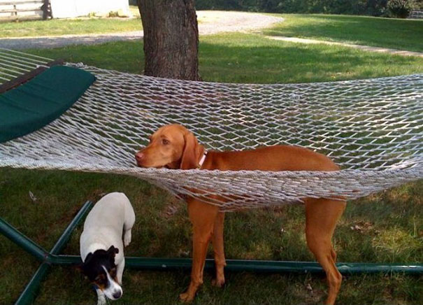 cats-and-dogs-losing-the-battle-with-human-furniture-9
