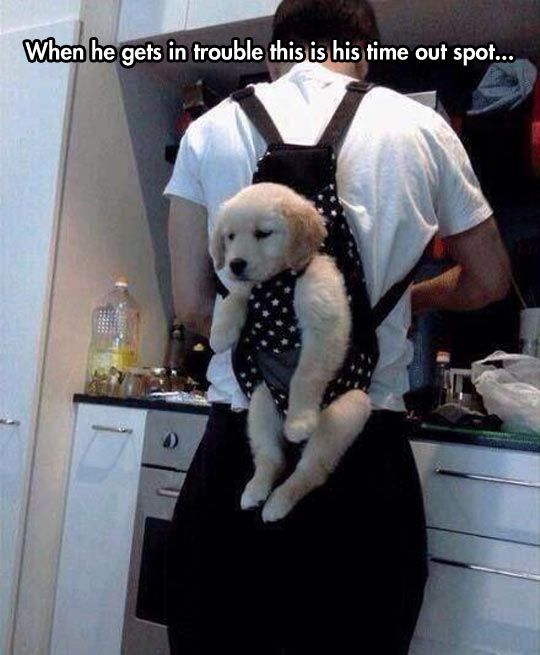 Cats And Dogs Losing The Battle With Human Furniture 30